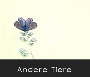 andere tiere