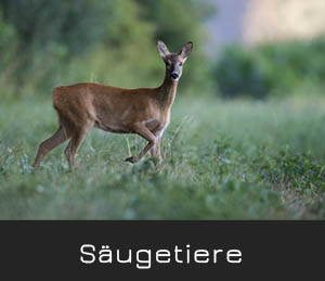 saugetiere